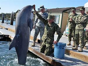 There is such a thing as militarized dolphins - Business ...