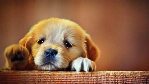 Pics For > Cute Sad Puppy Dog Face