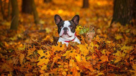 cute puppies enjoy fall southern living