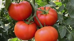 Quand Planter Les Tomates Cerises : les 25 meilleures id es de la cat gorie comment planter ~ Farleysfitness.com Idées de Décoration
