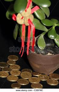 Geldbaum Feng Shui : feng shui coins on money tree with gold coins symbolising success and stock photo picture and ~ Bigdaddyawards.com Haus und Dekorationen