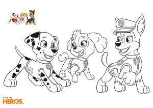 dessin  colorier pat patrouille coloriage pat patrouille