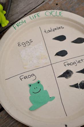 craft  frog life cycle activity educationcom