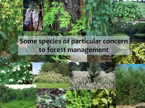 Invasive Plants And Forest Management Powerpoint
