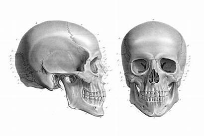 Skull Anatomy Human Atlas Illustrations 1866 Textbook