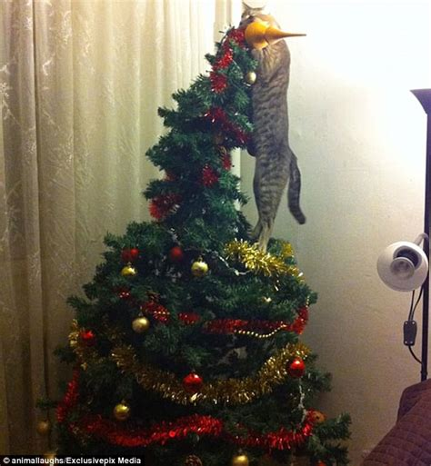 cat first seen christmas tree hilarious photos reveal the cats and dogs ruining daily mail