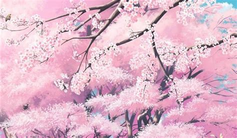 beautiful anime cherry blossom tree phone wallpaper