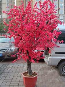 Sakura Baum Kaufen : online kaufen gro handel sakura bonsai aus china sakura bonsai gro h ndler ~ Frokenaadalensverden.com Haus und Dekorationen
