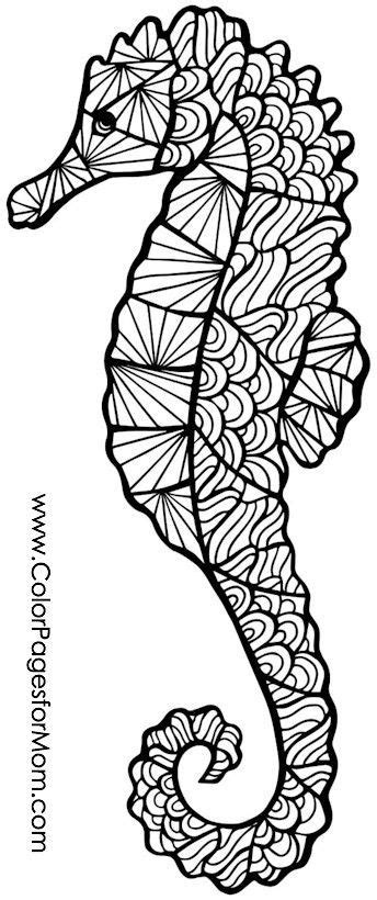 seahorse coloring pages  adults  getcoloringscom  printable colorings pages  print