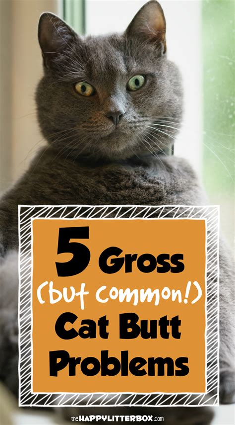 What You Need To Know About Your Cats Butt