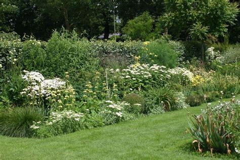 wit blad rode rand witte bloemen vijver meer dan 1000 idee 235 n over border planten op pinterest