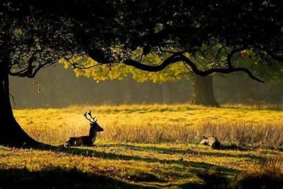 Nature Wild Desktop Dual Forest Animals Deer