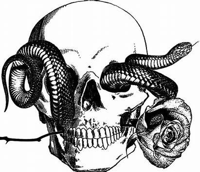 Snake Tattoo Skull Human Rose Coloring Adult