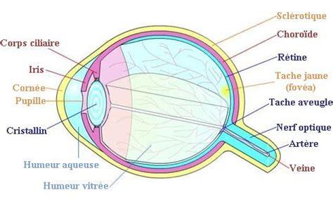 quelques exp 233 riences pour mettre en 233 vidence les propri 233 t 233 s de l oeil culturesciences physique