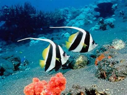 Underwater Wallpapers Fish