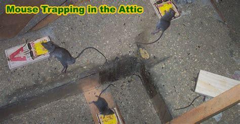 rid  mice   attic