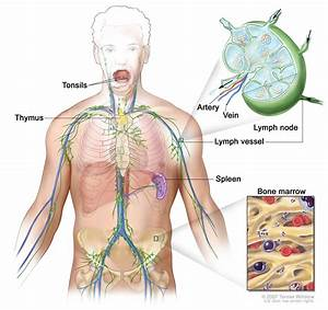 How Many Lymph Nodes Are In The Body   donttouchthespikes.com