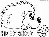 Hedgehog Coloring Colorings Animal sketch template