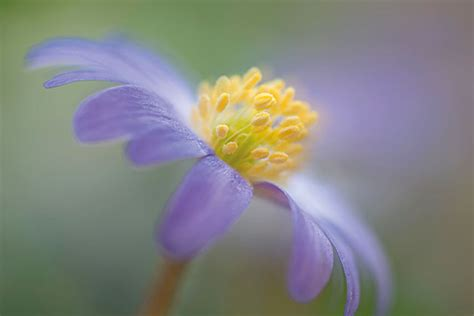 top macro flower photography tips amateur photographer