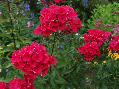 cottage garden august