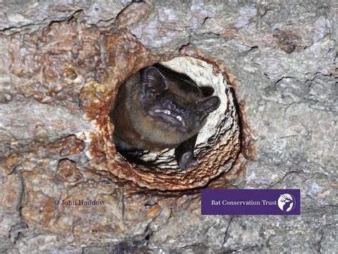 bat conservation trust