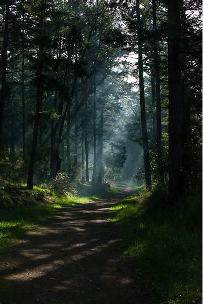 Portrait Forest Nature Shadow Sunlight Sun Path