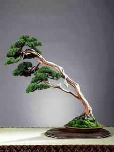 Bonsai Baum Arten : 25 einzigartige japanische baum ideen auf pinterest ~ Michelbontemps.com Haus und Dekorationen