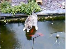 Katze auf dem Eis auf Goldfischjagd