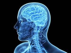 Reversing Cognitive Decline
