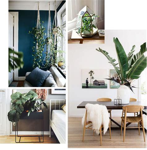 Le piante pendenti da interno sono molto decorative. I fiori e le piante da interno e d'appartamento di cui ti ...