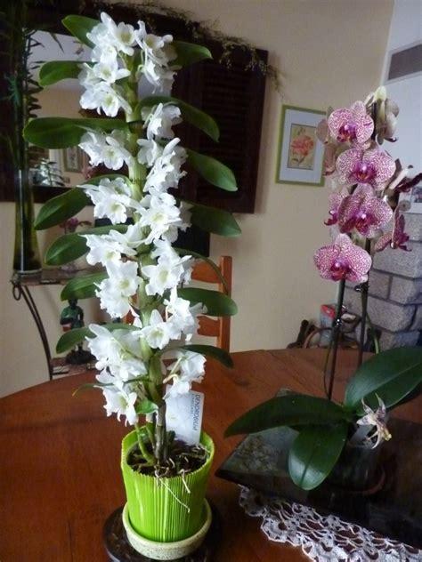comment couper une orchidee apres la floraison motortrends