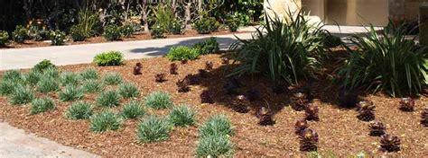 drought tolerant gardens landscape designer contractor
