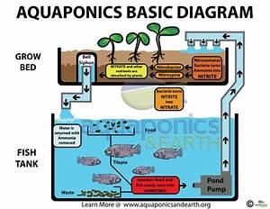 How To Diy Aquaponics