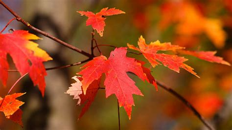 How & Why Do Leaves Change Color?   Mental Floss