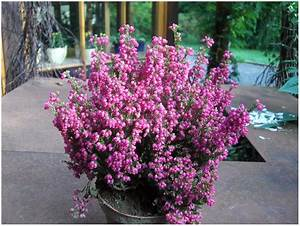 Blumen Für Schattigen Balkon : winterharte pflanzen fur balkon und terrasse hauptdesign ~ Orissabook.com Haus und Dekorationen