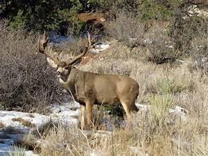 Image Gallery monster mule deer