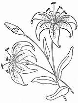 Coloring Pages Flowers Lily Flower Embroidery Tiger Patterns Flickr Lilies Wb Ovary Colouring Designs Labeled Applique Drawing Desenhos Pattern Fabric sketch template