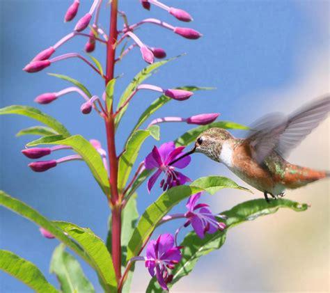 flowers  flower lovers flowers  humming birds