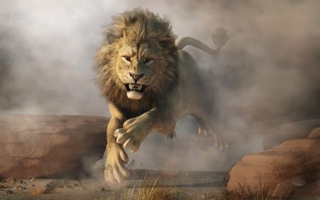 lion attack cats animals background wallpapers