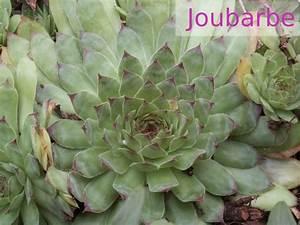 Couvre Sol Vivace : plantes et fleurs ~ Premium-room.com Idées de Décoration