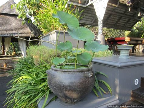 lotus garden thai 59 photos 17 best images about house front yard garden on