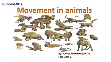 Movement in Animals Class 6 Science lesson NCERT CBSE