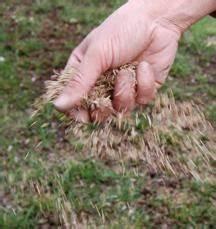 Comment Refaire Sa Pelouse : comment refaire une pelouse ab m e paperblog ~ Carolinahurricanesstore.com Idées de Décoration