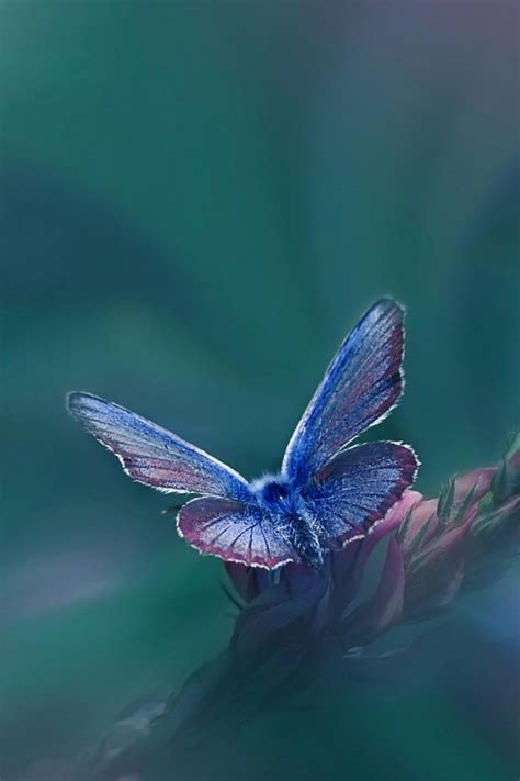 Animated Butterfly Wallpaper For Mobile - butterfly wallpapers for mobile phones best hd wallpaper