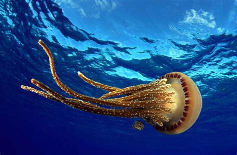 jellyfish work howstuffworks