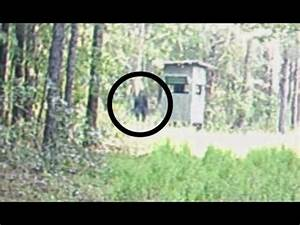 REAL Bigfoot ACTUALLY Caught on Camera 2017?! [Actual ...