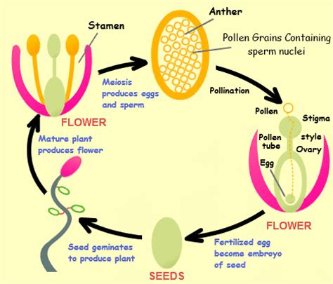 quotes  plant reproduction  quotes