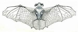 Bats  U2013 Salt Spring Conservancy