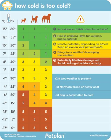 How Cold Is Too Cold To Take Your Dog For A Walk? Here & Now