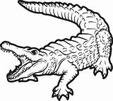 Coloring Alligator Pages sketch template